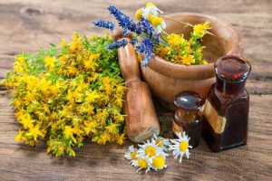 Herbs-for-Summer-Complaints